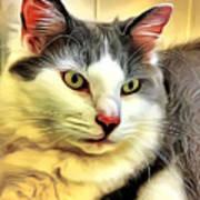 Focused Feline Art Print