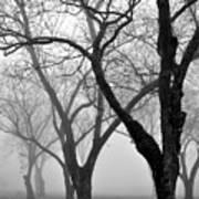 Fog 1 Art Print by Beverly Hammond