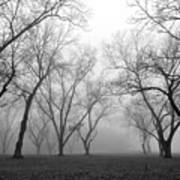 Fog 3 Art Print by Beverly Hammond