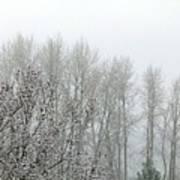 Fog And Light Snow Art Print