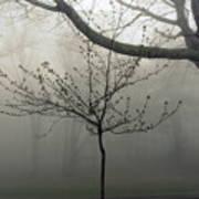 Fog In Shenandoah Art Print