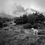 Fog In The Organ Mountains Art Print