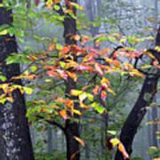 Foggy Fall Forest Art Print