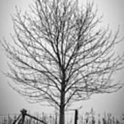 Foggy Lone Tree Hill Fine Art Art Print
