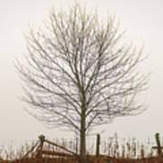 Foggy Lone Tree Hill Art Print