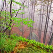 Foggy Misty Spring Morning Print by Thomas R Fletcher