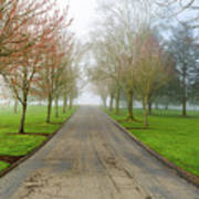 Foggy Morning At The Park Art Print
