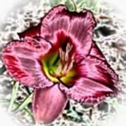 Foiled Beauty - Daylily Art Print