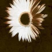 Folded Daisy Art Print