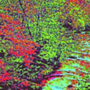 Foliage Stream D4 Art Print