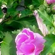 Following A Bumble Bee In Flight Art Print