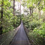 Foot Bridge In Costa Rica Art Print