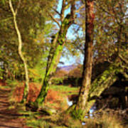 Footpath At The Edge Of Lantys Tarn In The Lake District Cumbria Art Print