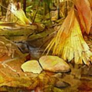 Footpath In National Park Art Print