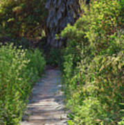 Footpath In Peters Canyon I Art Print