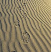Footprints In The Sand Art Print by Joe  Palermo