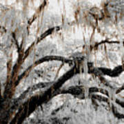 For The Grace Of The Beauty Of A Aged Tree Art Print