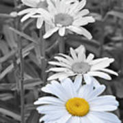 For The Love Of Daisy Art Print