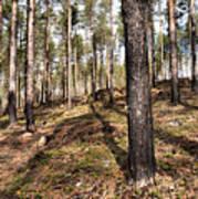 Forest Next Summer After A Fire Art Print