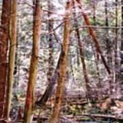 Forest Bling Art Print