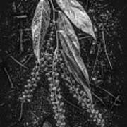 Forest Botanicals In Black And White Art Print