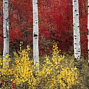 Forest Color Art Print
