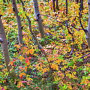 Forest Colors Art Print