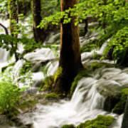 Forest Flows Art Print