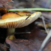 Forest Fungi Art Print