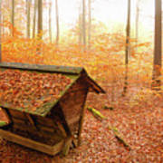 Forest In Autumn With Feed Rack Art Print by Matthias Hauser