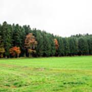 Forest In Bavaria Art Print