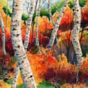Forest In Color Art Print