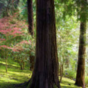 Forest In Portland Japanese Garden Art Print