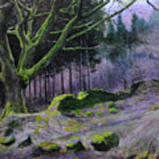 Forest In Wales Art Print