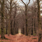 Forest Lane Near Maarsbergen Art Print