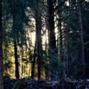 Forest Magic 8 Art Print