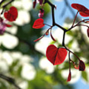 Forest Pansy Redbud Leaves In Spring Art Print