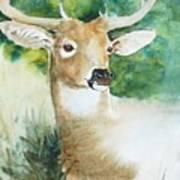 Forest Spirit Art Print by Christie Michelsen