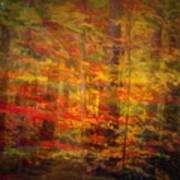 Colorful Forest, Smoky Mountains, Tennessee Art Print