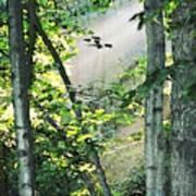Forest Sunbeam Art Print
