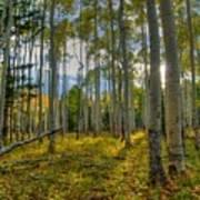 Forest Sunlight Art Print