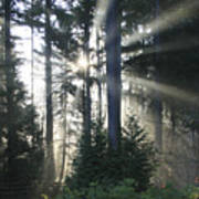 Forest Sunrise Art Print