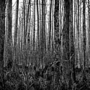 Forest Thru The Trees Art Print
