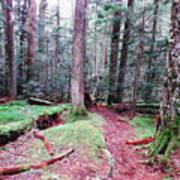 Forest Trail Art Print