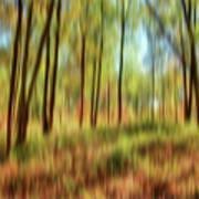 Forest Vision Art Print