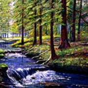 Forest Waters Art Print by David Lloyd Glover