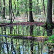 Forest Wetland Art Print