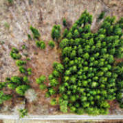 Forest With Green Trees From Above Art Print