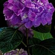 Forever Violet Art Print