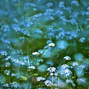 Forget-me-not Flower Patch Art Print